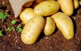Hacerle cum tribute a las patatas