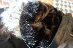 Canadian Peak Mountain Wear negra T L  10