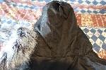 Canadian Peak Mountain Wear negra T L  9
